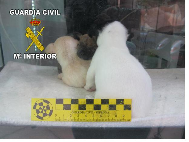 Cachorros rescatados por la Guardia Civil. /IDEAL