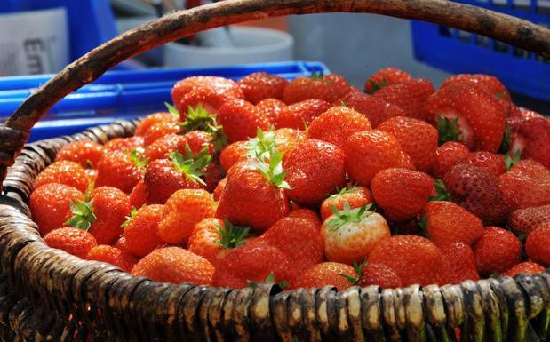 Dieta de las fresas adelgazar