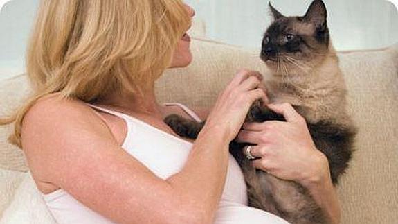 toxoplasmosis en el gato